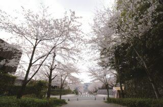 高見神社ギャラリー