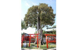 恋木神社ギャラリー